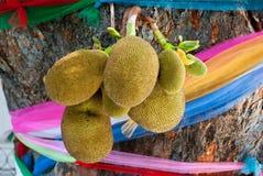 Juicy jackfruit Stock Images