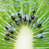 Juicy Kiwi Pulp with Seeds Royalty Free Stock Photo