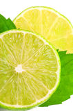 Juicy  lemon and leaf of mint Royalty Free Stock Images