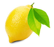 Juicy lemons isolated on the white background Stock Photography