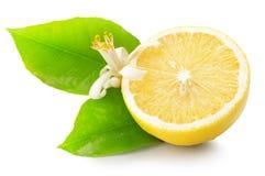 Juicy lemons isolated on the white background Stock Photography