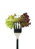 Juicy lettuce Royalty Free Stock Photography
