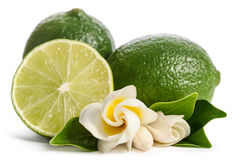 Juicy lime with its flowers Royalty Free Stock Images