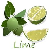 Juicy lime on white background. Stock Images