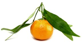 Juicy mandarin with green leaves Royalty Free Stock Photos