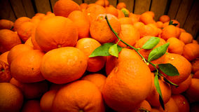 Juicy mandarins in a wooden box and a green branch Stock Image