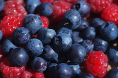 Juicy mature berries of bilberry and raspberry Royalty Free Stock Photos