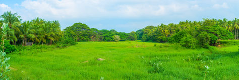 The juicy meadow Royalty Free Stock Photo