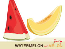 Juicy melon and watermelon. Icon for design Stock Photos