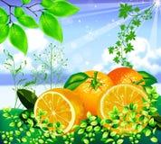 Juicy orange background Stock Photography