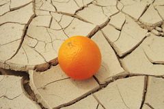 Juicy orange and drought. Royalty Free Stock Photo