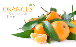 Juicy oranges. Isolated on white background and sample text place Royalty Free Stock Photography