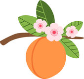 Juicy Peach Stock Images