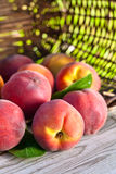 Juicy peaches Royalty Free Stock Photography