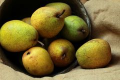 Juicy pears. In a bowl Royalty Free Stock Images