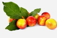 Juicy plum Stock Photo