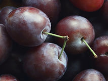 Juicy plum on the table Stock Images