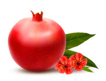 Juicy pomegranate with leaves. Stock Image