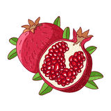 Juicy pomegranate. Vector illustration Royalty Free Stock Images