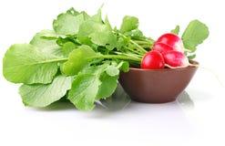 Juicy radish in ceramic plate Stock Images