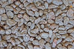 Juicy raisins Stock Photography