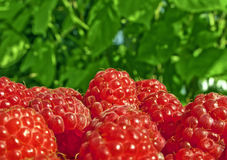 Juicy Raspberries Stock Photos