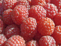 Juicy Raspberries Royalty Free Stock Photos