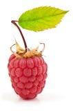 Juicy raspberry Royalty Free Stock Photos