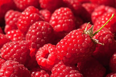 Juicy raspberry texture Royalty Free Stock Photo