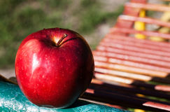 Juicy red apple in the sunshine Stock Images