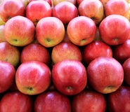Juicy red apples Stock Photography
