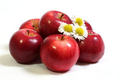 Juicy, red apples and  flowers of camomile. Royalty Free Stock Photography