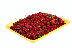 Juicy red currant in the yellow plastic tray Stock Image