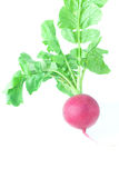 Juicy red radish with green leaves. Isolated on white Royalty Free Stock Photos