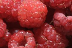 Juicy Red Raspberries Stock Image
