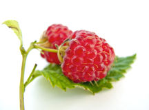 Juicy Red Raspberries on Green Leaf. Juicy red raspberries on a green leaf isolated on white background Stock Photography