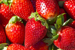 Juicy red strawberries. Group of juicy strawberry background, macro Royalty Free Stock Images