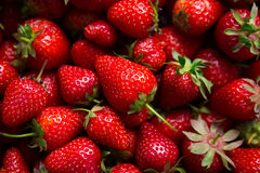 Juicy red strawberry Royalty Free Stock Image
