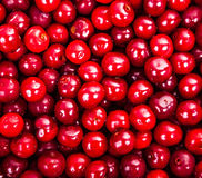 Juicy red sweet cherries Stock Images