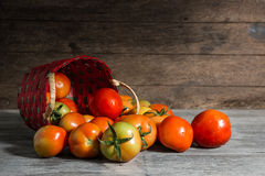Juicy red tomatoes Stock Photography