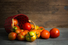 Juicy red tomatoes Royalty Free Stock Images