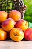 Juicy ripe apricots Royalty Free Stock Image