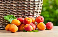 Juicy ripe apricots Royalty Free Stock Photos