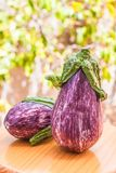 Juicy ripe eggplant. Straight from the garden royalty free stock photography