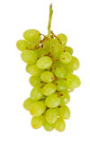 Juicy Ripe Grapes Isolated on White Background Stock Image