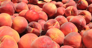 Juicy ripe peaches in the sun Royalty Free Stock Photo