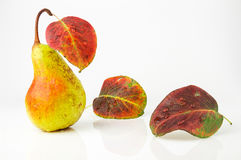 Juicy and ripe pear with bright autumn leaves. Juicy and ripe pear with colorful autumn leaves, isolated on white background Royalty Free Stock Images