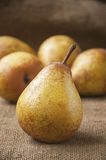 Juicy ripe pear close-up, against the background of burlap, sack Stock Photo