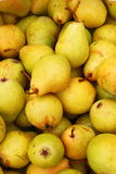 juicy ripe pears Stock Photography