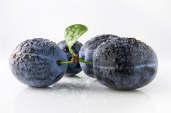 Juicy ripe plum with water drops. On a white background Stock Images